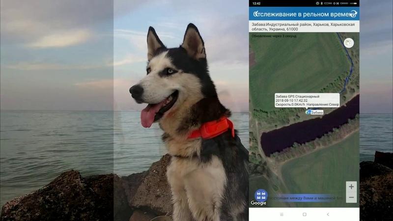 Охотничий GPS трекер ДеМС отслеживание в реальном времени - GPS Tracker DeMS in Real time