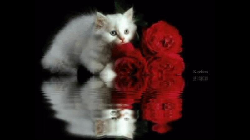 Мельница - Белая кошка. Колыбельная...