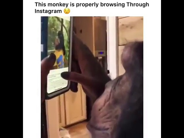 This monkey is properly browsing through Instagram