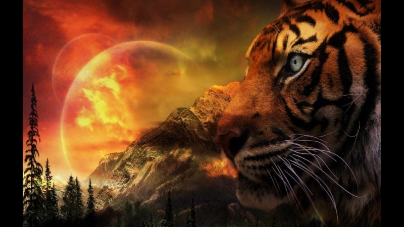 Shere.Khan - Tiger Tribute HD