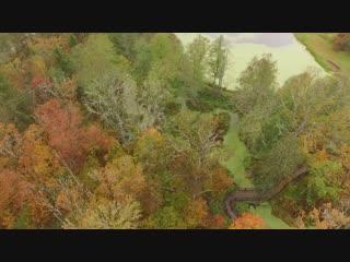 Брянский лес. Вид сверху