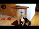 Кошка играет с когтеточкой.