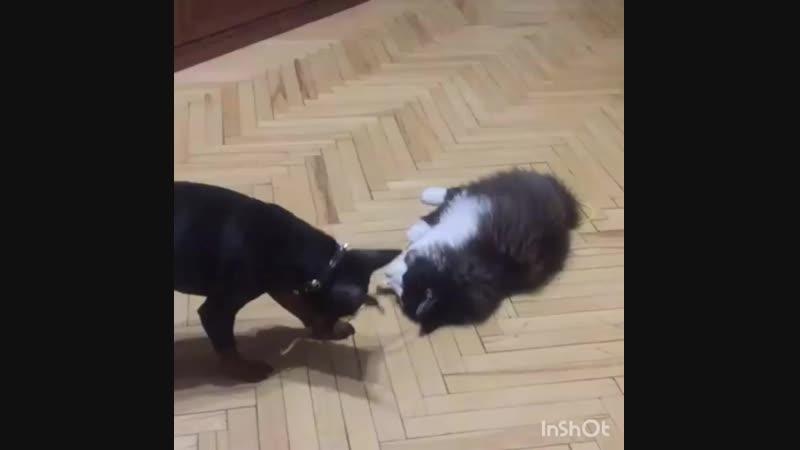 Поиграй со мной Чимбо