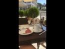 Мария Захарова Завтрак в Анкаре был захватывающим