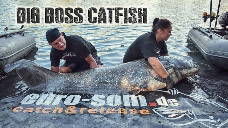 Трофейный сом euro som Big Boss Catfish