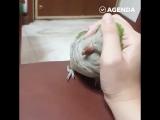 Попугайчик хочет ласки и любви