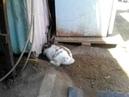 Conejo rescata a su amiga gatita