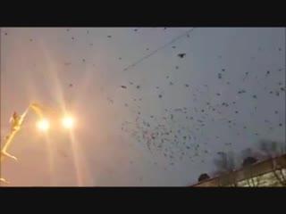 Зловещие стаи чёрных воронов кружат над сборищем автокефалистов