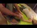 Thai El Masajı Bursa Masör Bursa Masaj Bursa Refleksoloji ~ 0543 325 46 12