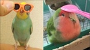 Funny Parrots Videos Compilation cute moment of the animals Cutest Parrots 4