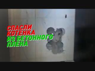 В Уфе спасатели вытащили котенка из бетонной стены