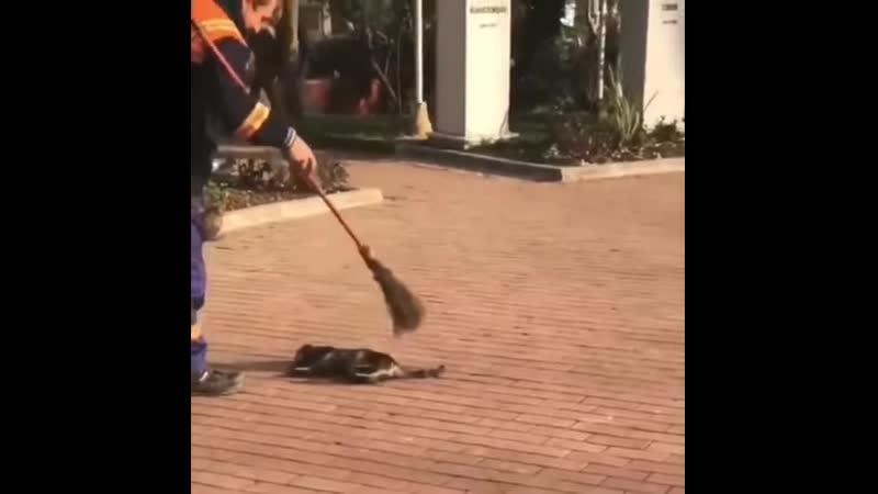 Человек жестоко избивает кошку до смерти метлой :))