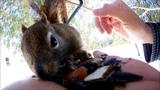 Ewan Dobson - Red Squirrel - March 13th 2019