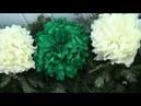 Віночок - початок ( Коломия ) - Wreath - the beginning