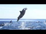 Shnobic - Дельфины бродяги (Doom RockPost Rock)