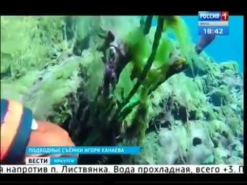Шокирующие кадры Сине-зелёные водоросли оккупировали Байкал
