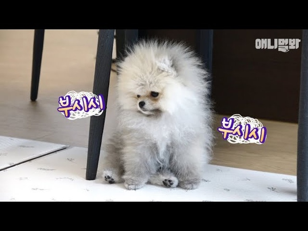 너무 귀여워버렸다 ㅣ Have You Ever Seen The Dog Do Moonwalk Like Michael Jackson