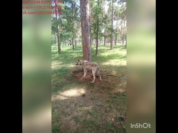 ВолкВоланд нашёл клад 😄 ДИПЛОМ КУРСОВАЯ тvw 79127939429 vk.comid420983559