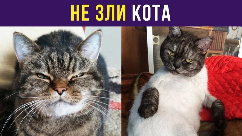 Приколы и мемы. Не зли кота | Мемозг 56