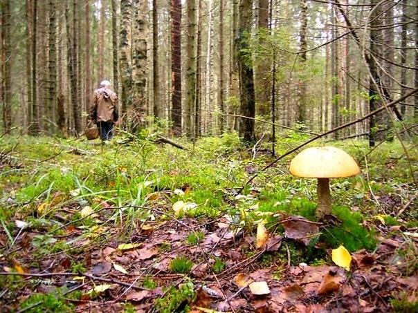 Грибники потерялись в лесу