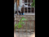 Соседский зоопарк