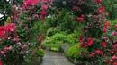 ❀ 9 лучших быстрорастущих вьющихся цветов для забора арок и шпалер на даче