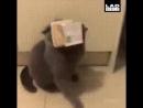 кошки милые