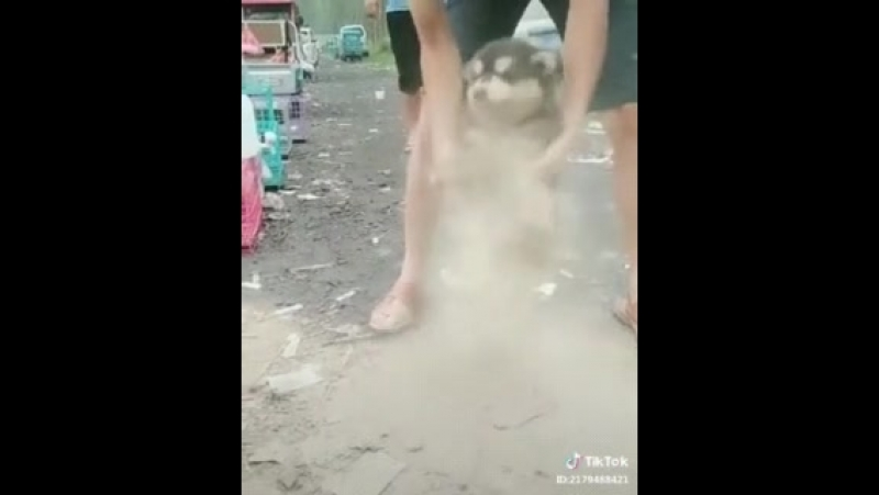А теперь попытаемся вытряхнуть всю пыль из этого щенка