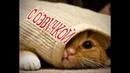 Приколы с котами - СМЕШНАЯ ОЗВУЧКА ЖИВОТНЫХ – ТЕСТ НА ПСИХИКУ Я РЖАЛ ПОЛЧАСА - DOMI SHOW