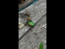 Майский хуячит на пролом