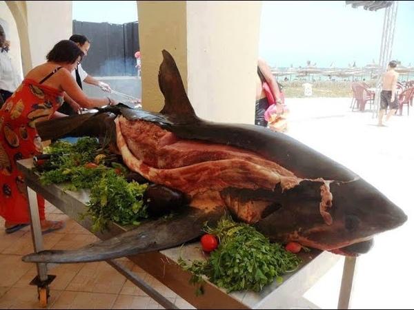 Акула в Краснодаре Поймали акулу и пожарили Стейк из акулы с соусом песто Сибас и фруктовый сок