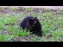 Жанна Агузарова Группа Браво Черный кот