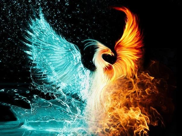 Фениксы А вы знаете, что фениксы еще существуют Просто теперь они иные. Знаете, почему вы не видели ни одной огненной птицы Я расскажу вам то, что точно знаю сама. Когда-то давно фениксы
