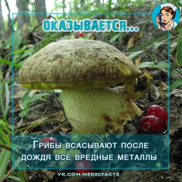 https://pp.userapi.com/c849028/v849028588/48f52/kudal8g5CWo.jpg