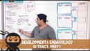 Gastrointestinal Development Embryology of the GI Tract Part 1