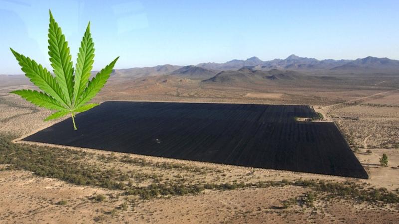 World's Biggest Marijuana Plantation