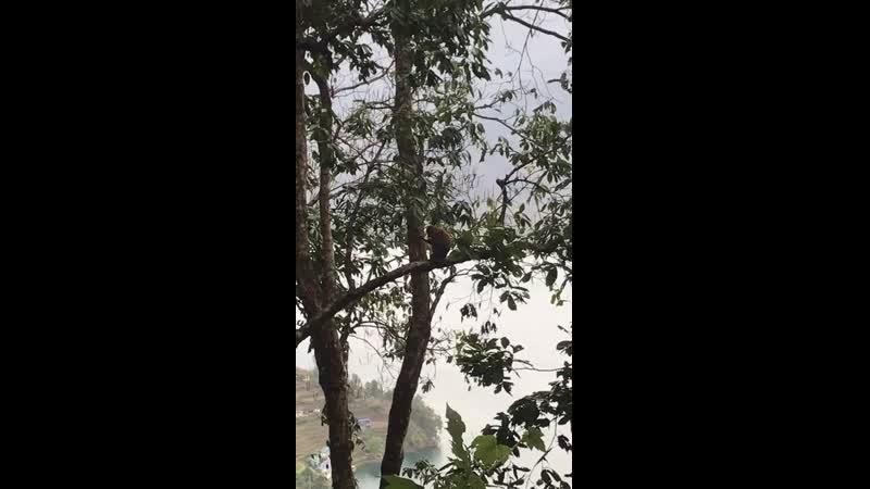 Покхара Ступа Мира