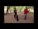 Гиперактивные собаки и как с ними справиться