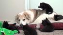 ПОПРОБУЙ НЕ ЗАСМЕЯТЬСЯ - Смешные Приколы с Животными до слез, смешные коты, Cute Cats 109