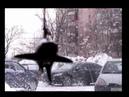 Снег(видео-кавер на песню Н.Носкова и А.Чуланского) акустич.версия.