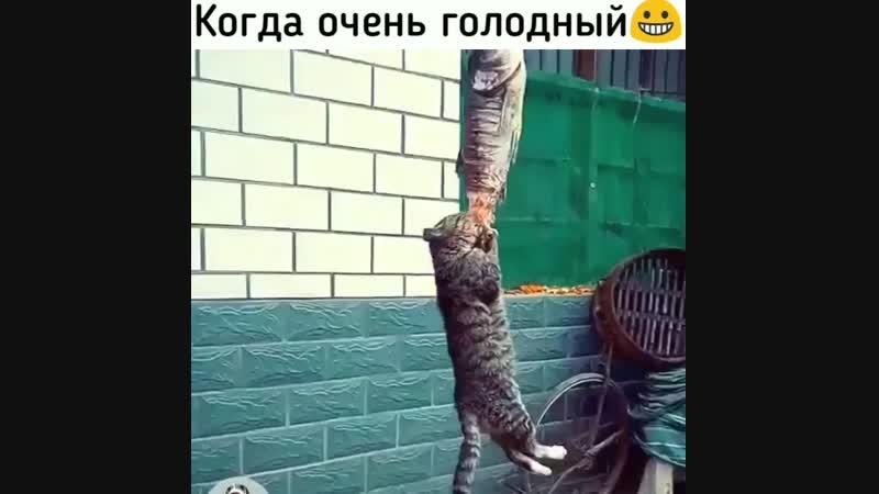 жрать захочешь, ещё и не так раскорячишся)
