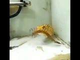 Желтая рыбка жрет всякую морскую хуй*ню под медетативную музыку