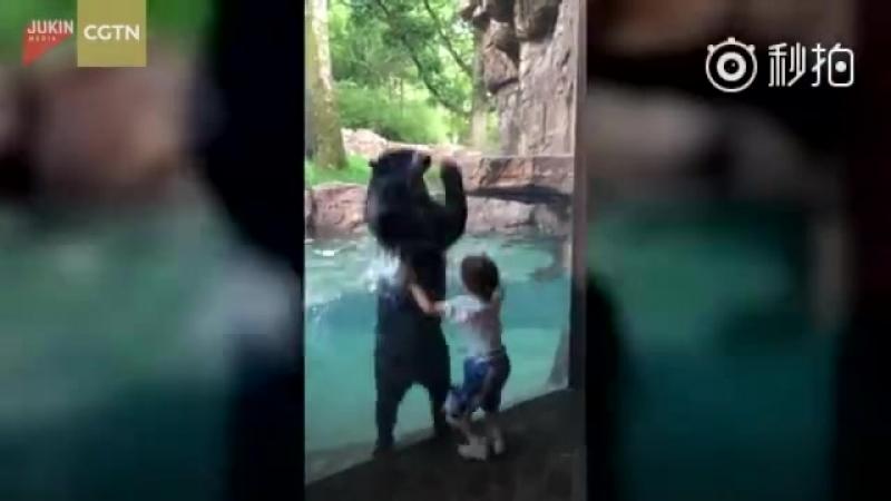 Видео с медведем прыгающим вместе с маленьким мальчиком в зоопарке Нэшвилла очень растрогало пользователей Сети.