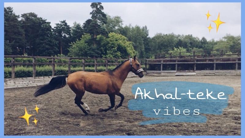 AKHAL-TEKE Vibes | Плюшке весело