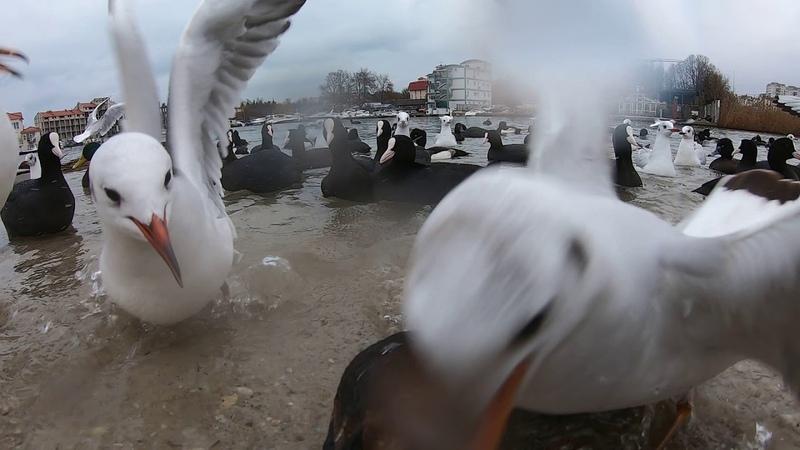 Кормим птичек в бухте Омега