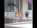 Собака бегает на беговой дорожке