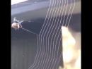 Паук плетёт паутину! Удивительное зрелище!