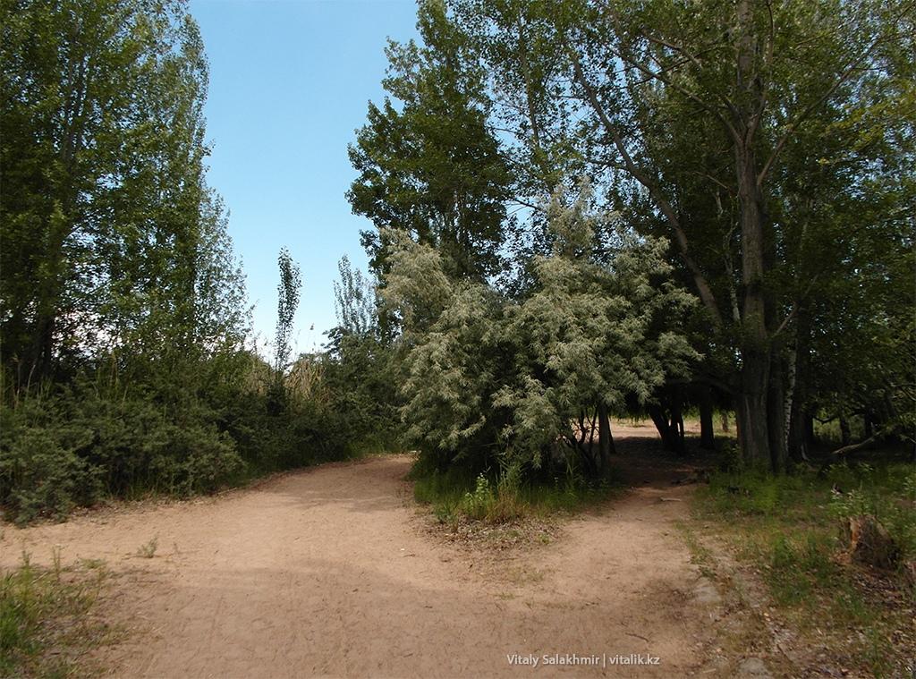 Деревья около озера Иссык-Куль