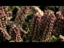 Бутовский лес. УНИЧТОЖЕНИЕ ПРИРОДЫ РАДИ ЖИЗНИ ЧЕЛОВЕКА?