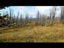 мёртвый лес
